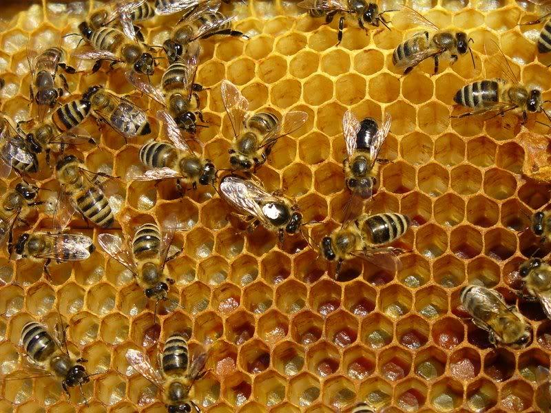 Isporuka mehanizacije i opreme za pčelarstvo
